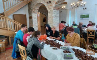 """Pet inkluzivnih volontera sudjelovalo u pripremama za """"Kestenijadu"""""""